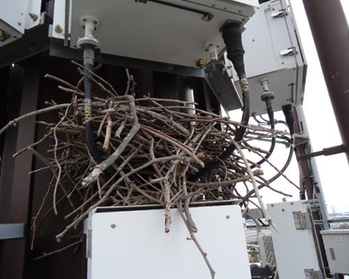 鳩よけ・鳩対策事例|株式会社 大木無線電気